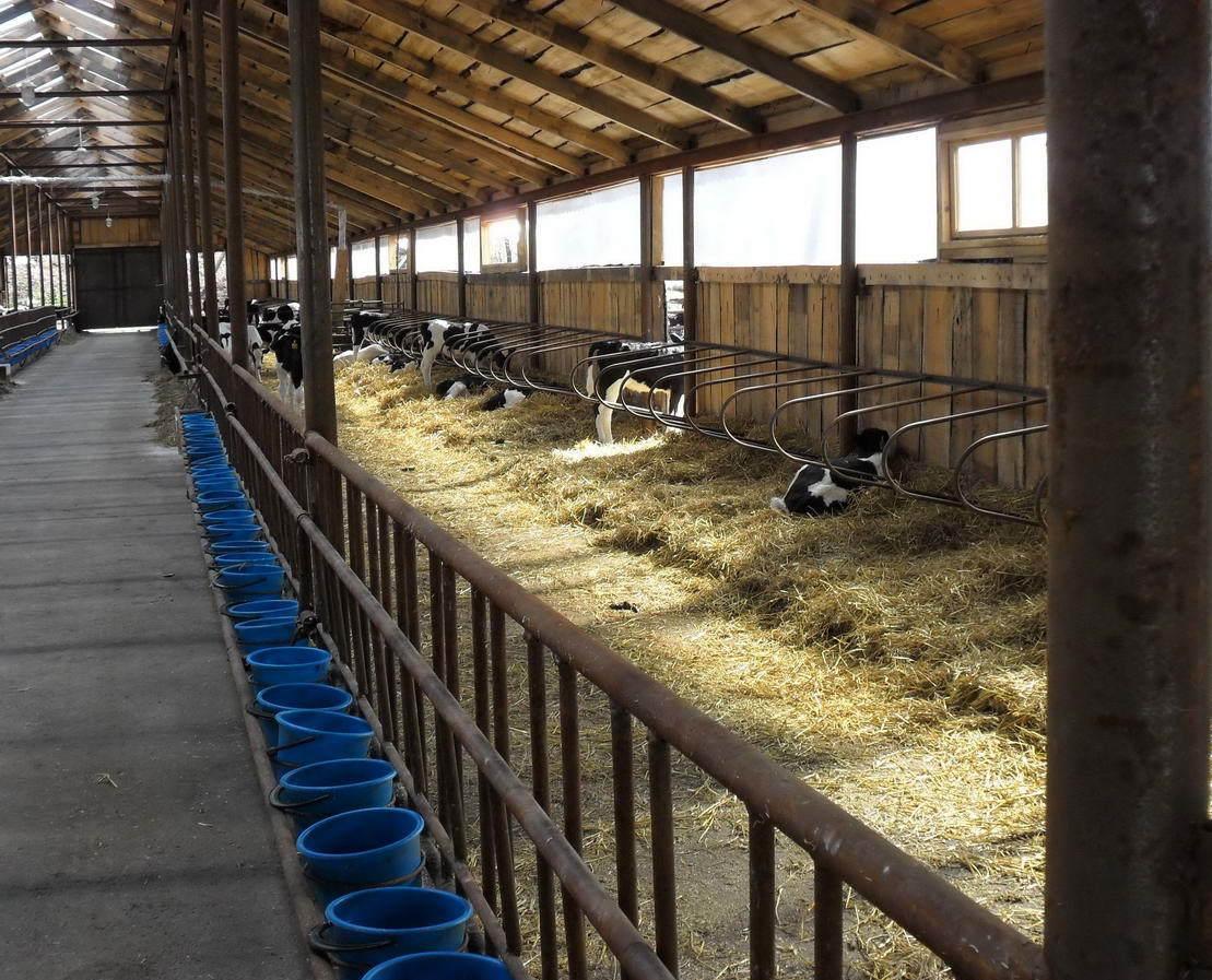 новых загон для откорма бычков фото показать